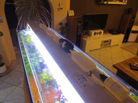 Reifebeschleunigung auf der Aquarienleuchte