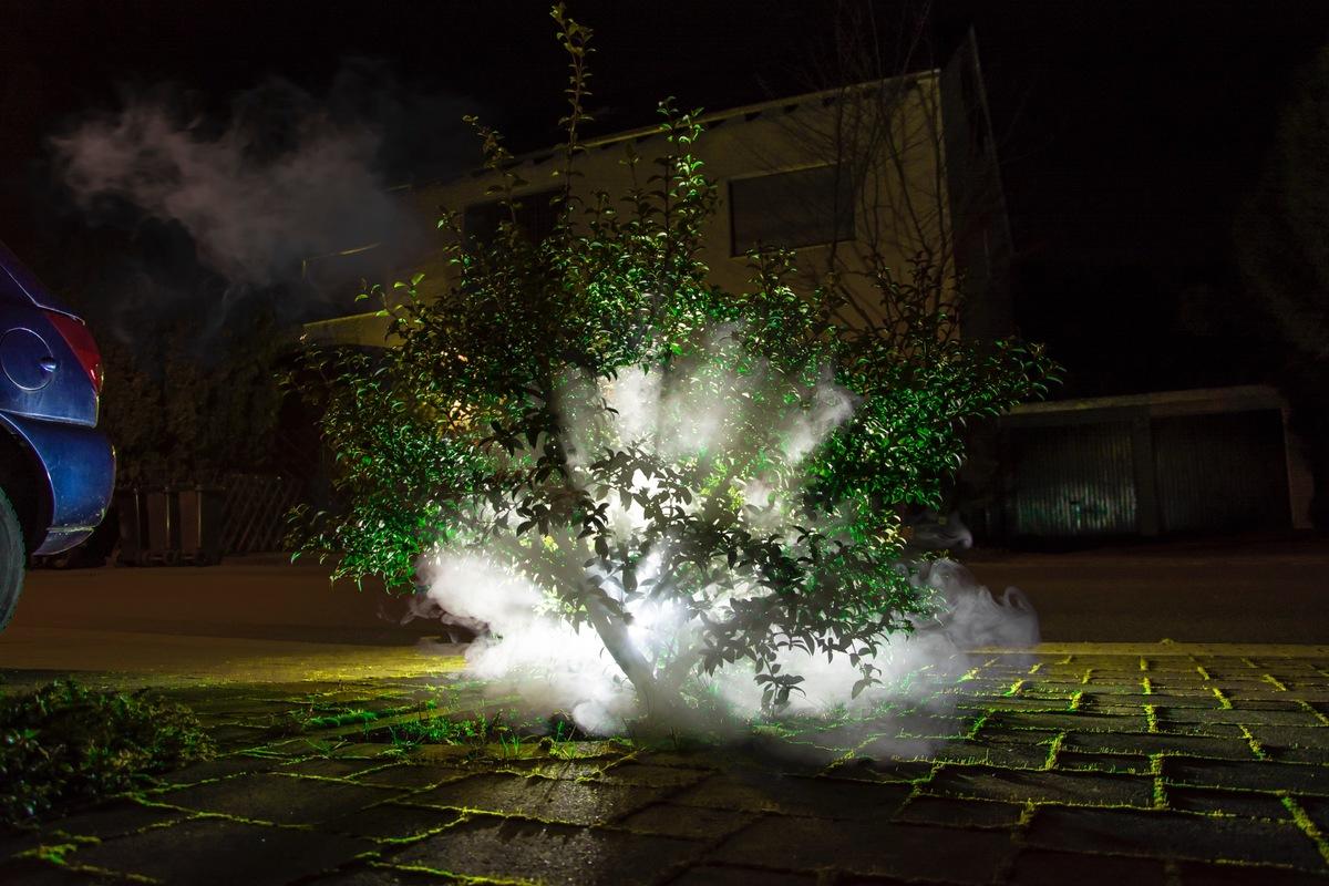Foggy Mini Tree
