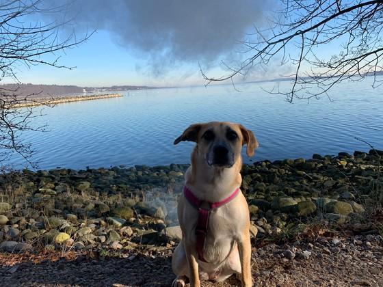 Endlich Sonne, on Tour mit unserem Hund!